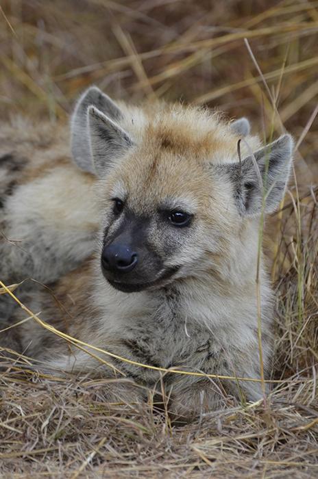 Children on Safari in South Africa