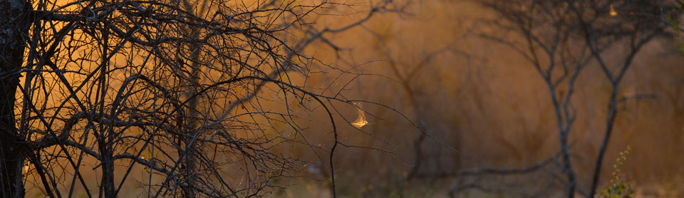 The African bush at sunrise